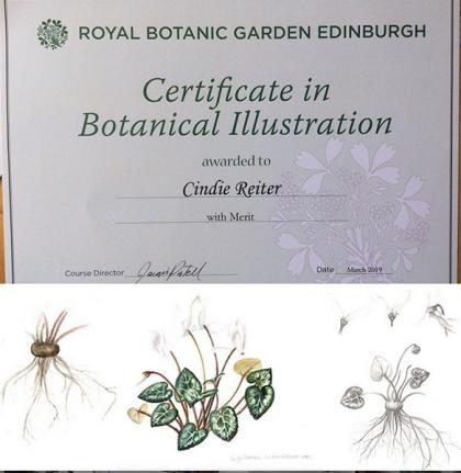 botanicalillustrationcertificate